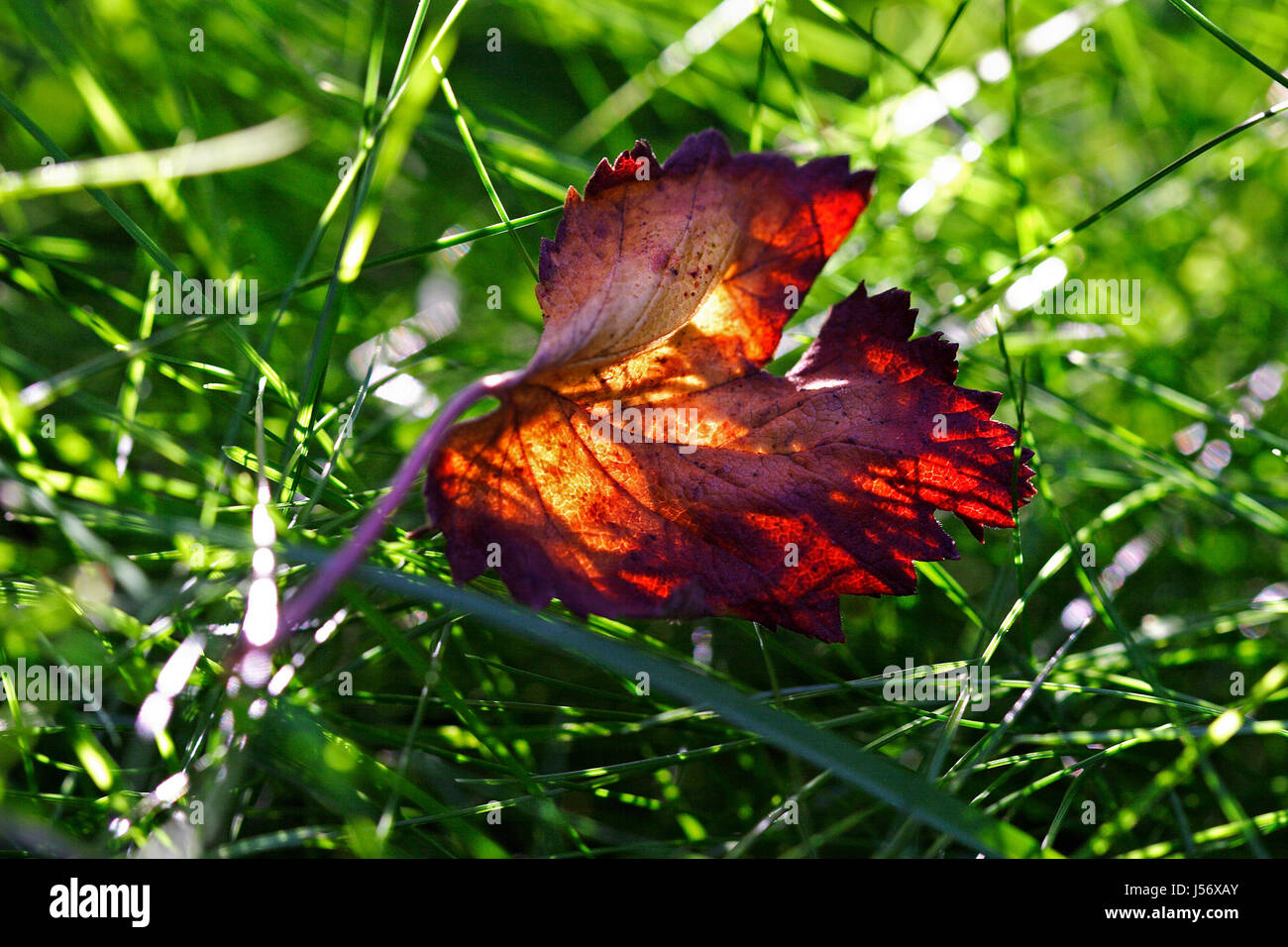 El verde follaje de otoño otoñal otoño temporada para colorear hoja ...