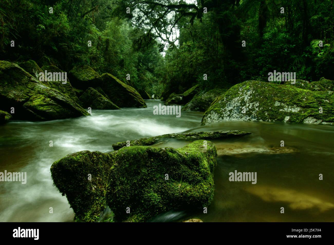 Medio ambiente Medio ambiente verde silencio Silencio silencio de radio stream Foto de stock