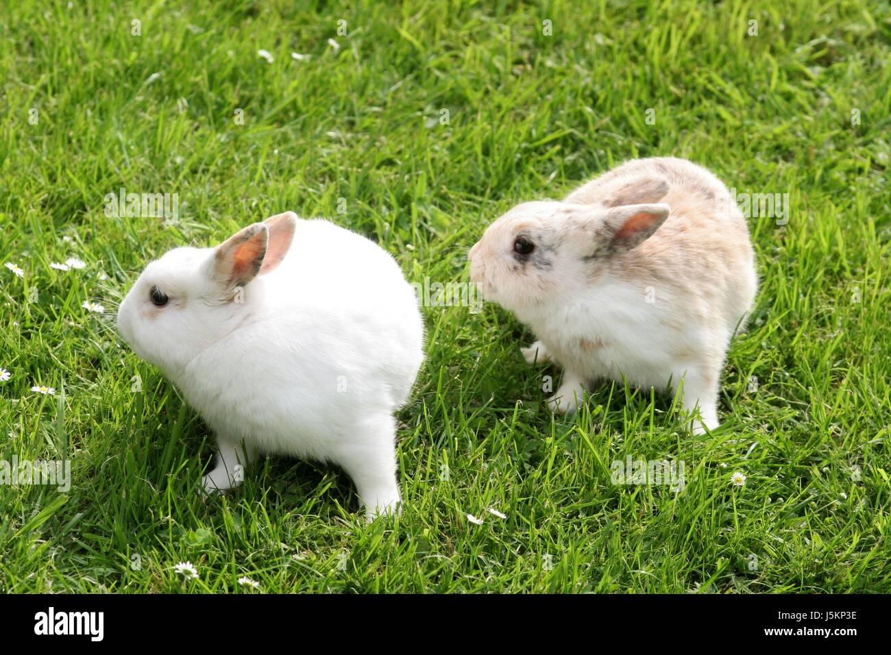 Los Animales Domésticos Animales Pequeños Roedores