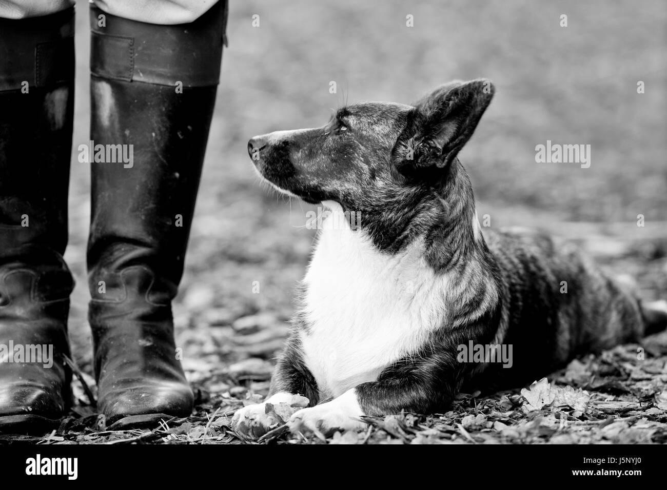 Inicio retrato cazador animal vigilante bw swarthy jetblack negro blanco negro profundo Foto de stock