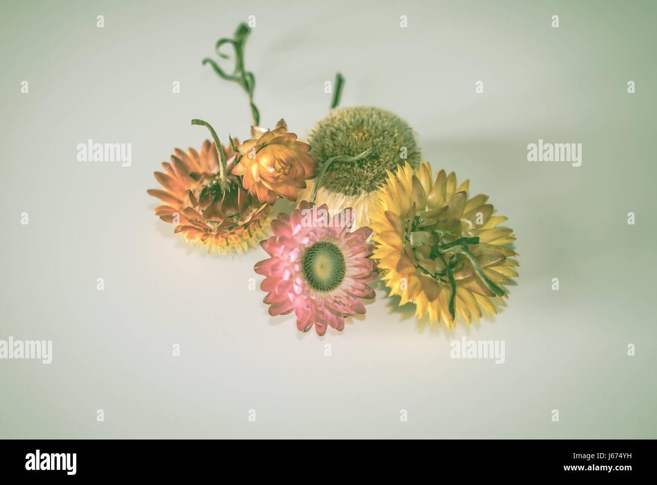 Directamente encima de la vista de flores contra fondos blancos Imagen De Stock