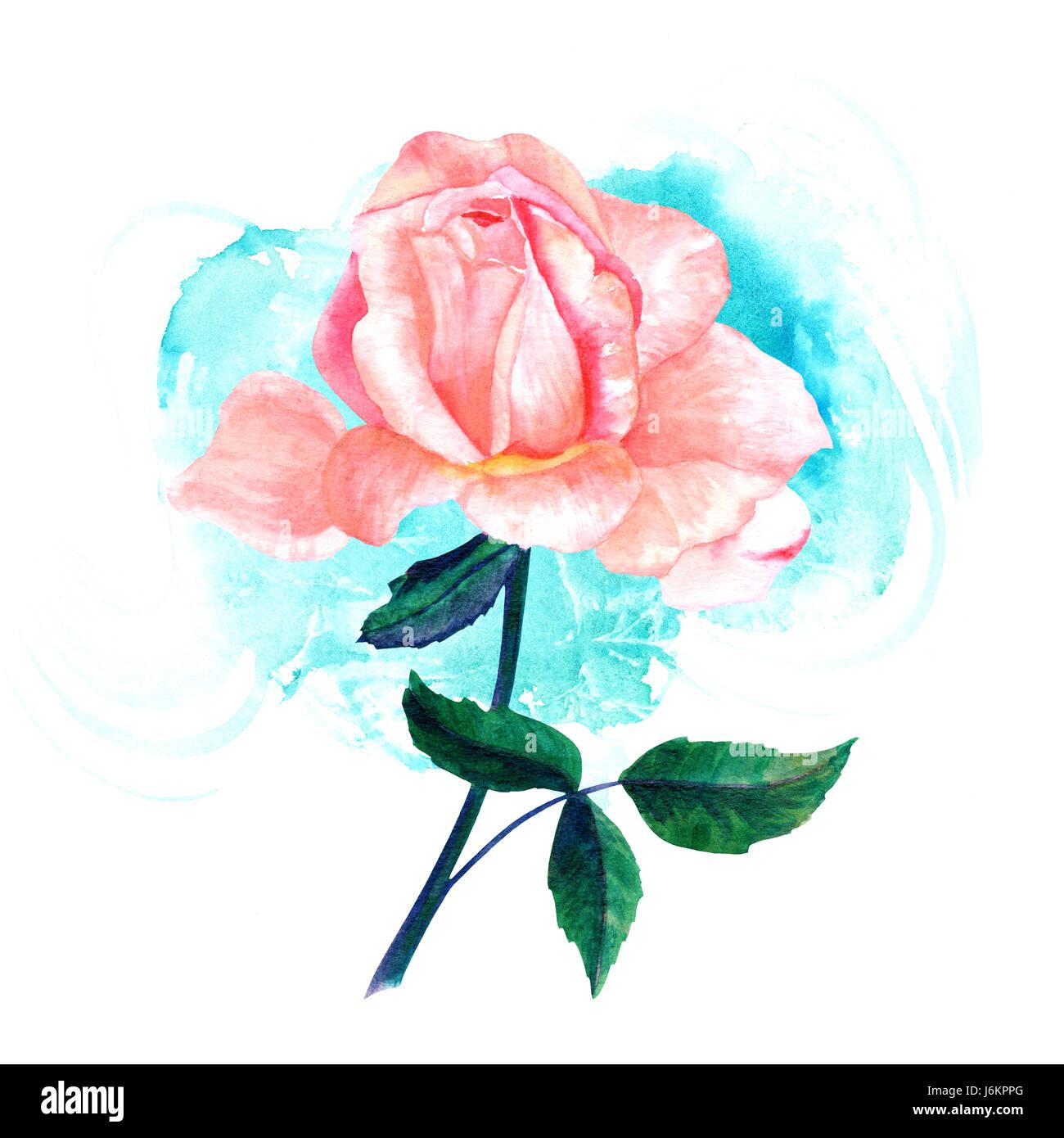 Dibujo De Acuarela De Tierna Rosa Rosa Flor Pintado A Mano De
