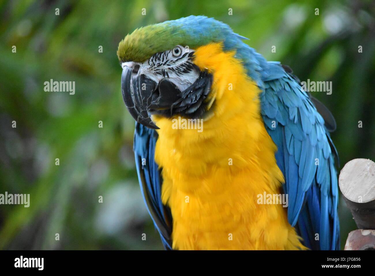 Coloridas aves Guacamayo Imagen De Stock