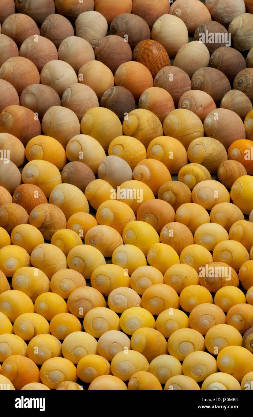La variación natural de los caracoles Imagen De Stock