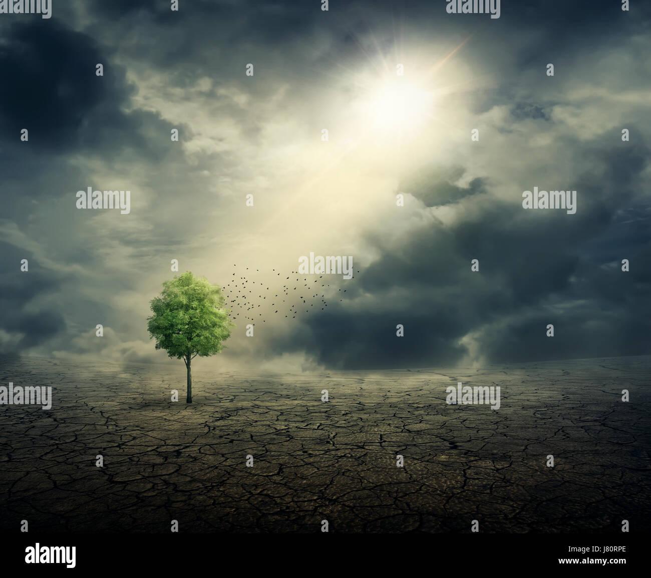 Árbol verde creciendo entre agrietado suelo desértico, con los rayos del sol en la fundición. Ecología Imagen De Stock