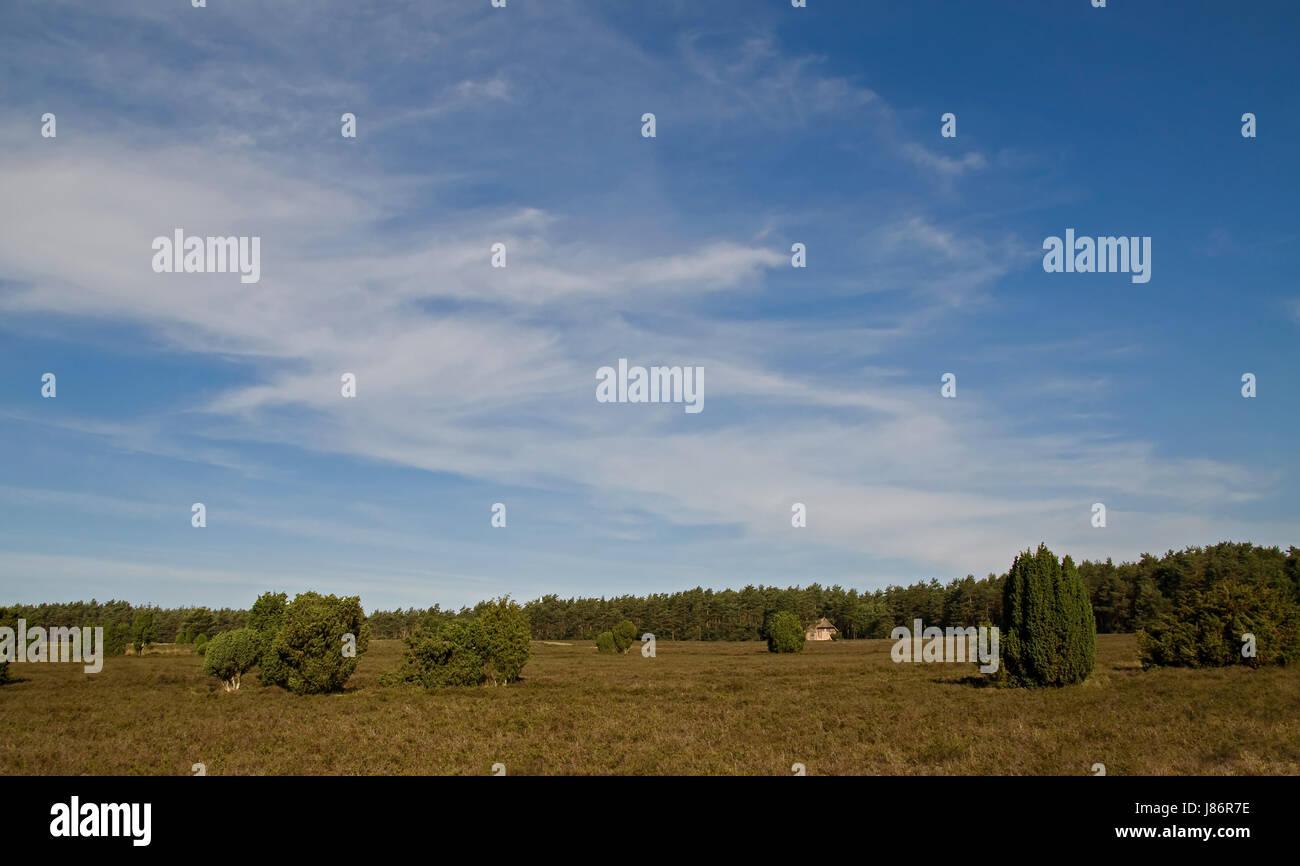 Día en verano heath juniper firmamento naturaleza sky blue house edificio vacaciones Foto de stock
