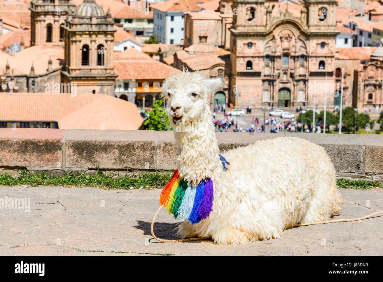 Lama durmiendo en el patio de la Iglesia de San Cristóbal, Cusco, Perú Imagen De Stock