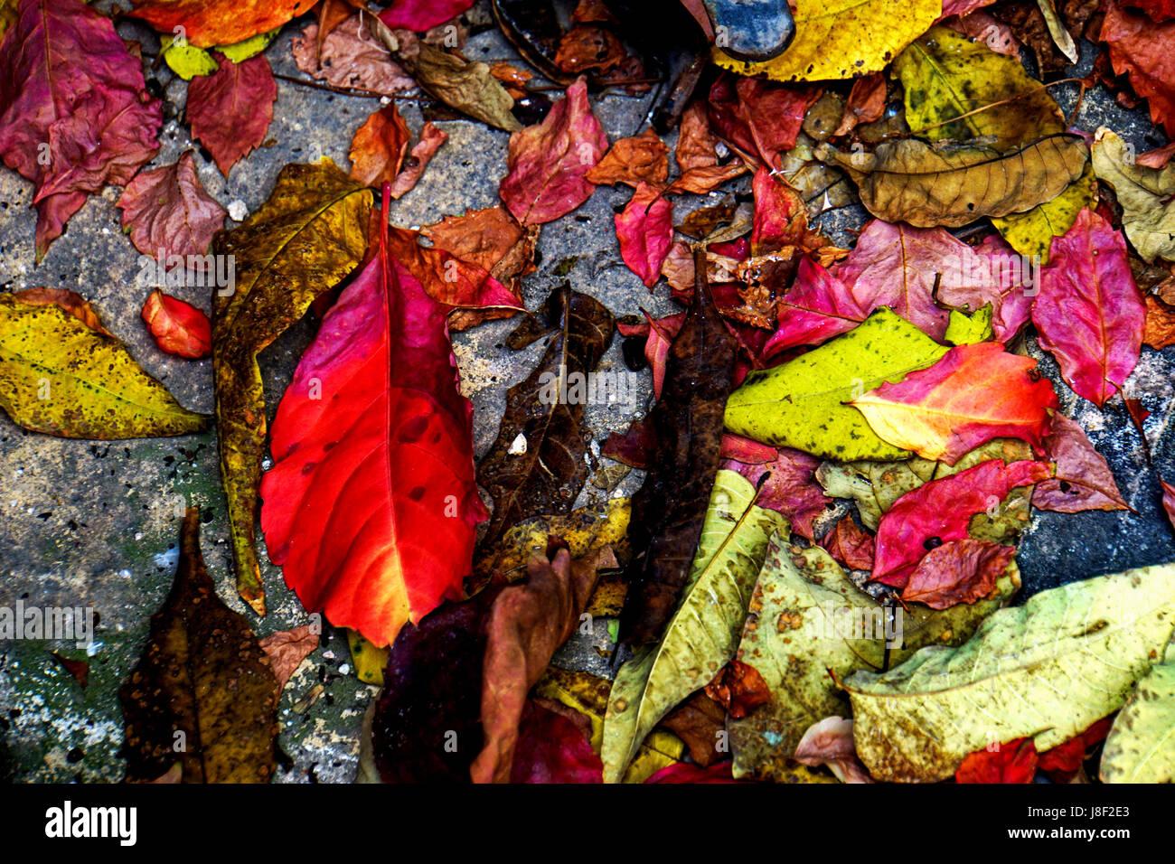 Coloridas hojas de otoño sobre el suelo Foto de stock