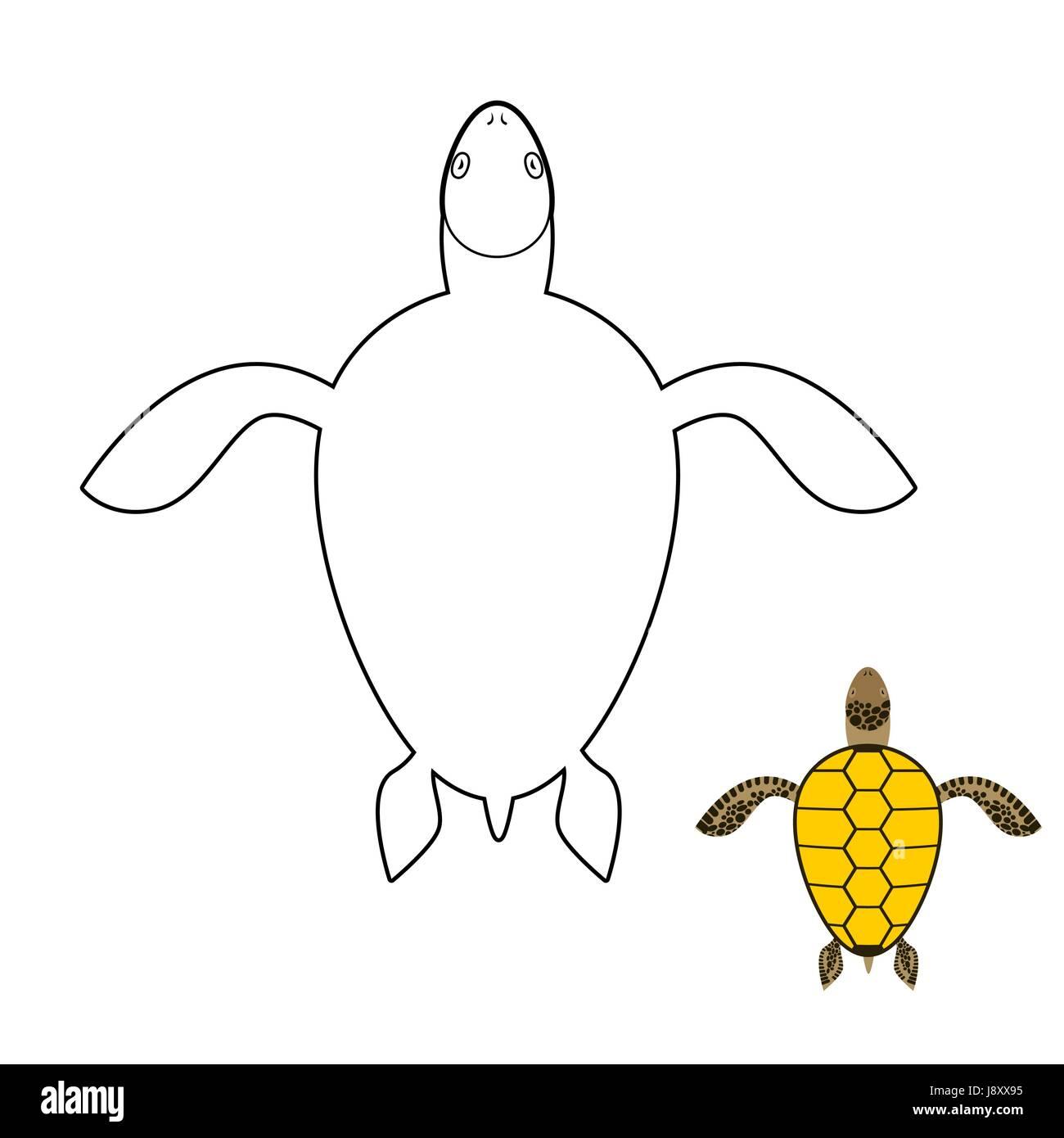 Turtle Drawing Imágenes De Stock Turtle Drawing Fotos De Stock