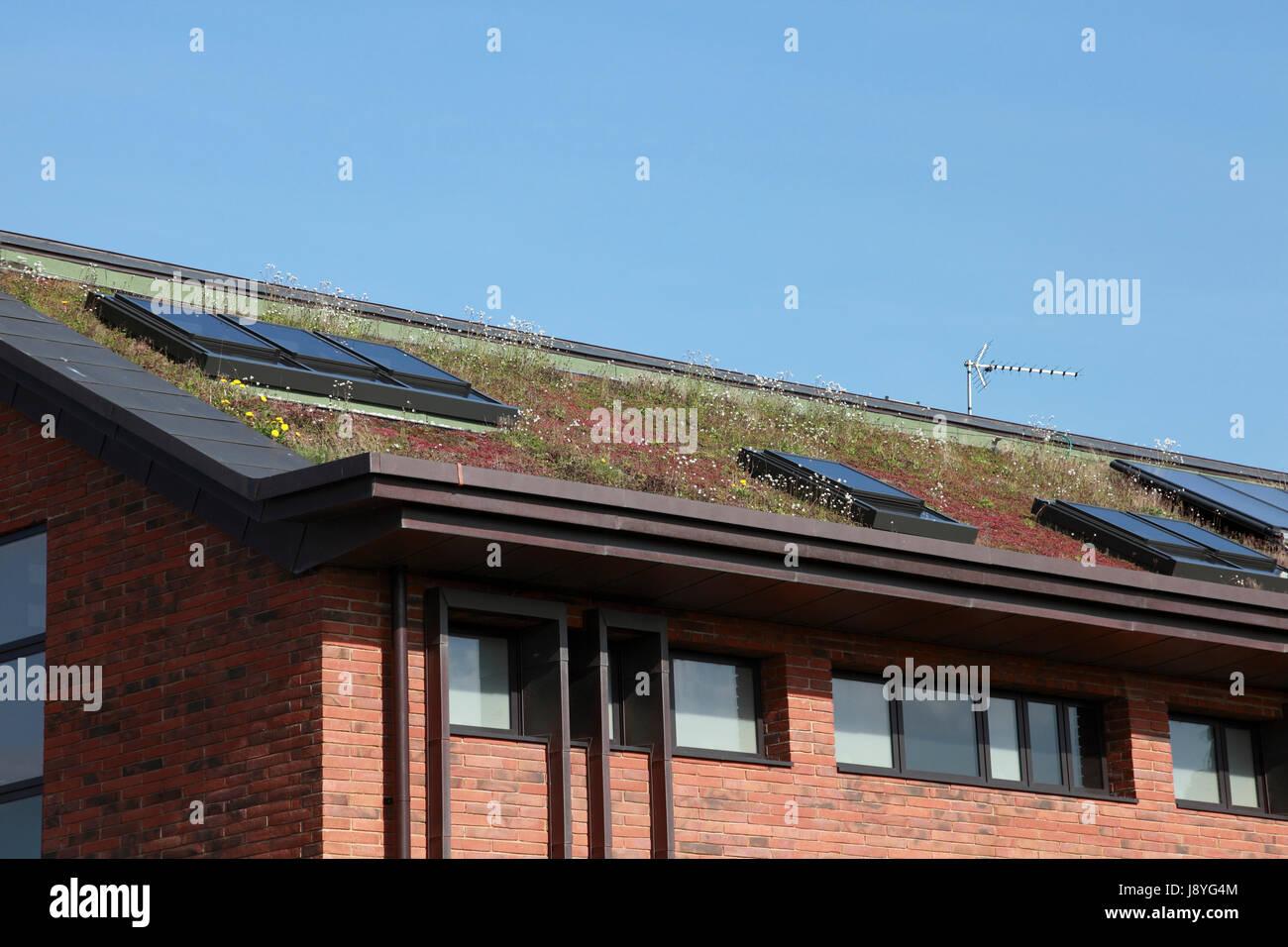 El techo de Market Drayton la estación de policía de baja energía construida con un verde sedum mat y paneles solares Foto de stock