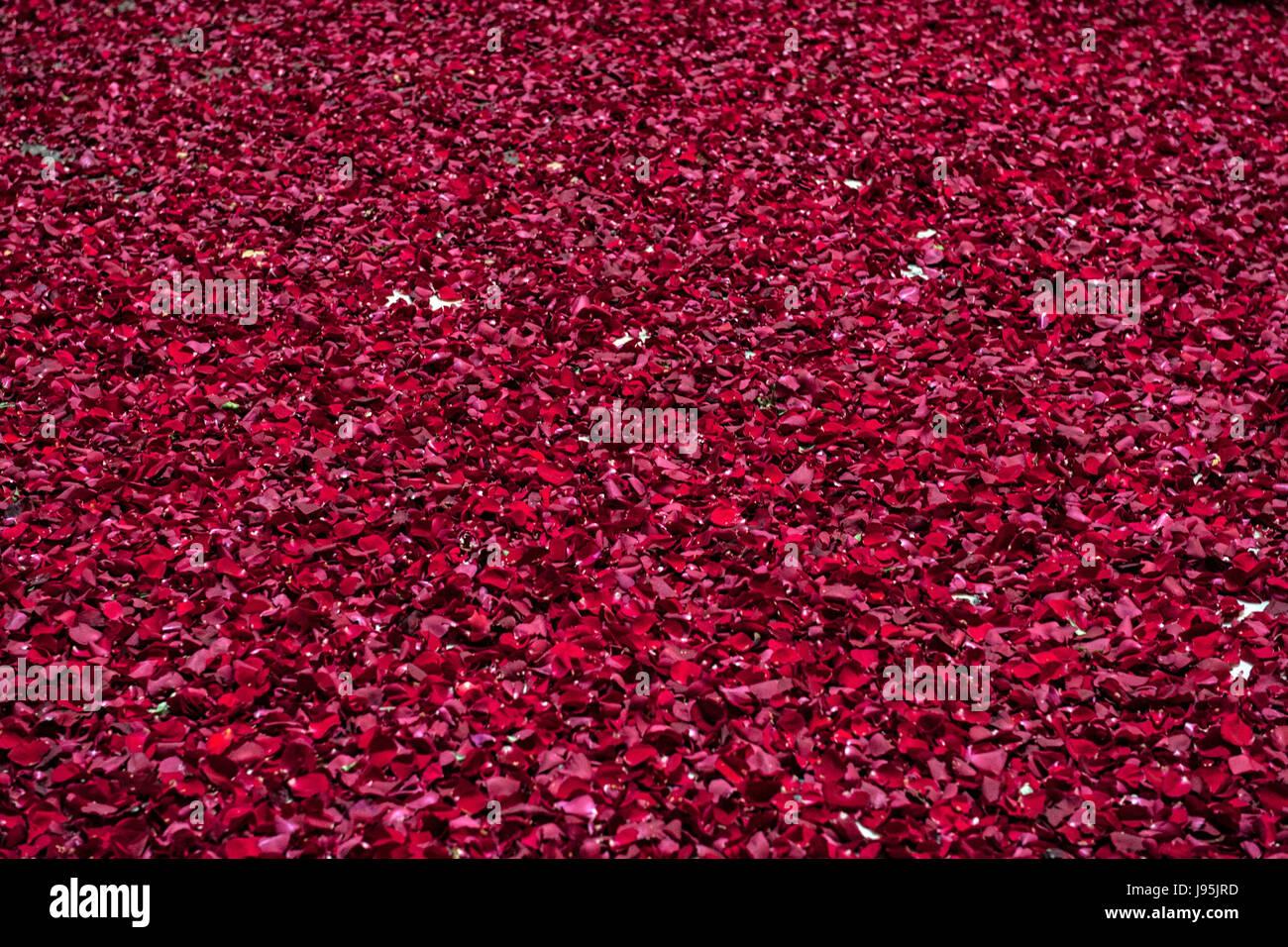 Roma, Italia. 04 junio, 2017. El piso del Panteón de Roma, Italia, totalmente cubierto de rosas rojas lanzados Imagen De Stock