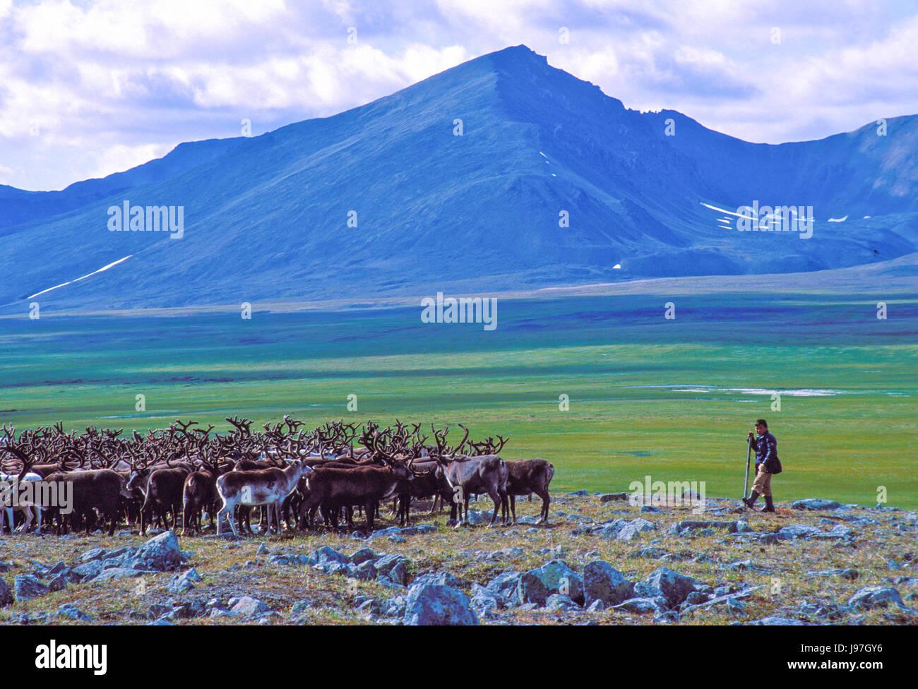 Chukchi nómadas pastores de renos campamento en los Chukchi o península de Chukotka, en el Lejano Oriente Imagen De Stock