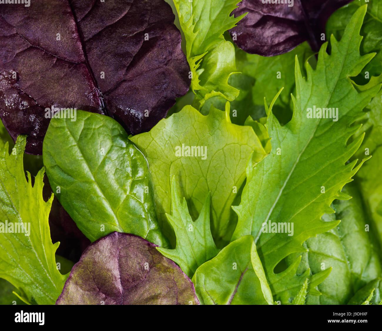 Resumen fondo natural de textura de hojas de lechuga Foto de stock