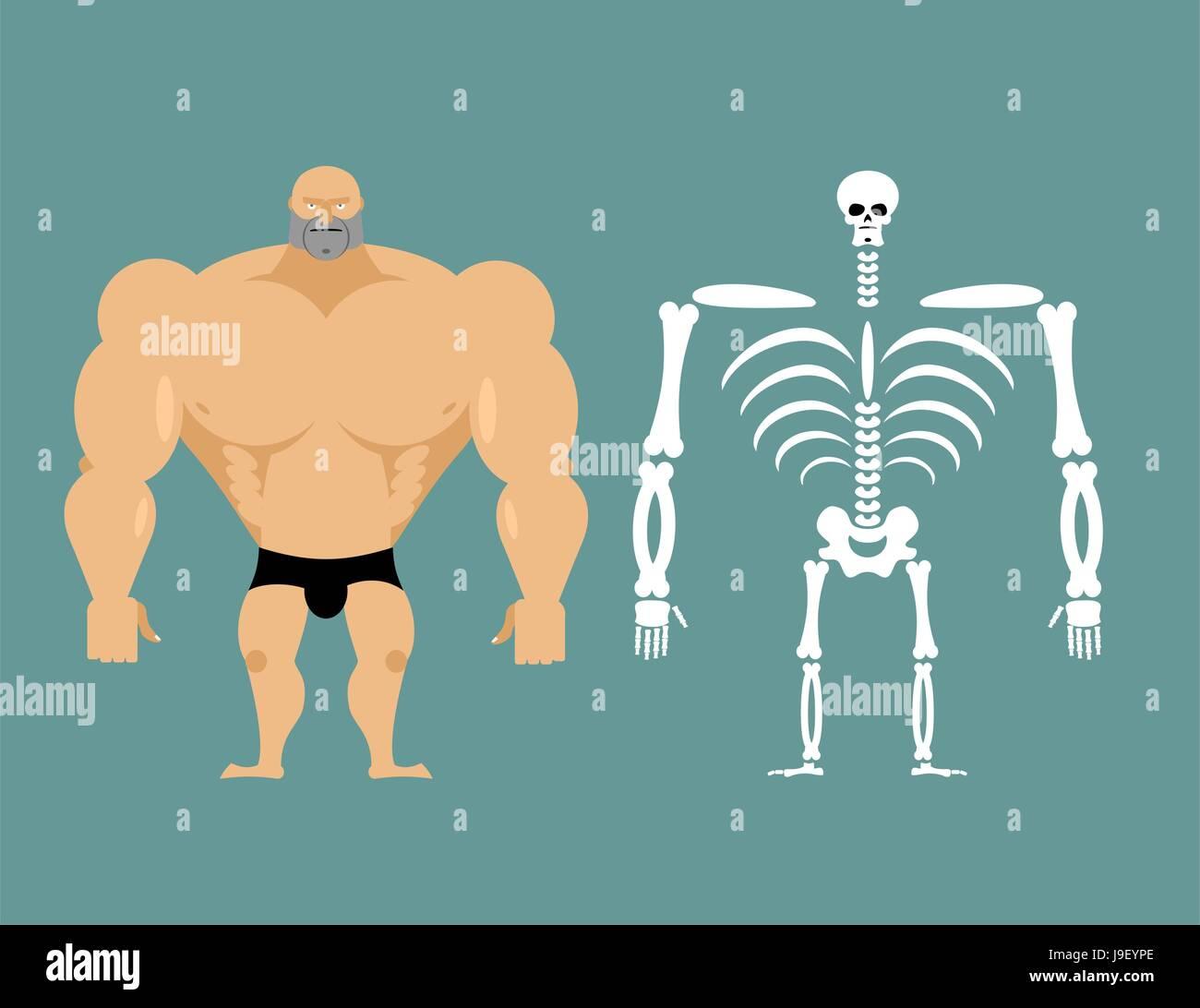 La estructura humana. El esqueleto de los hombres. La construcción ...