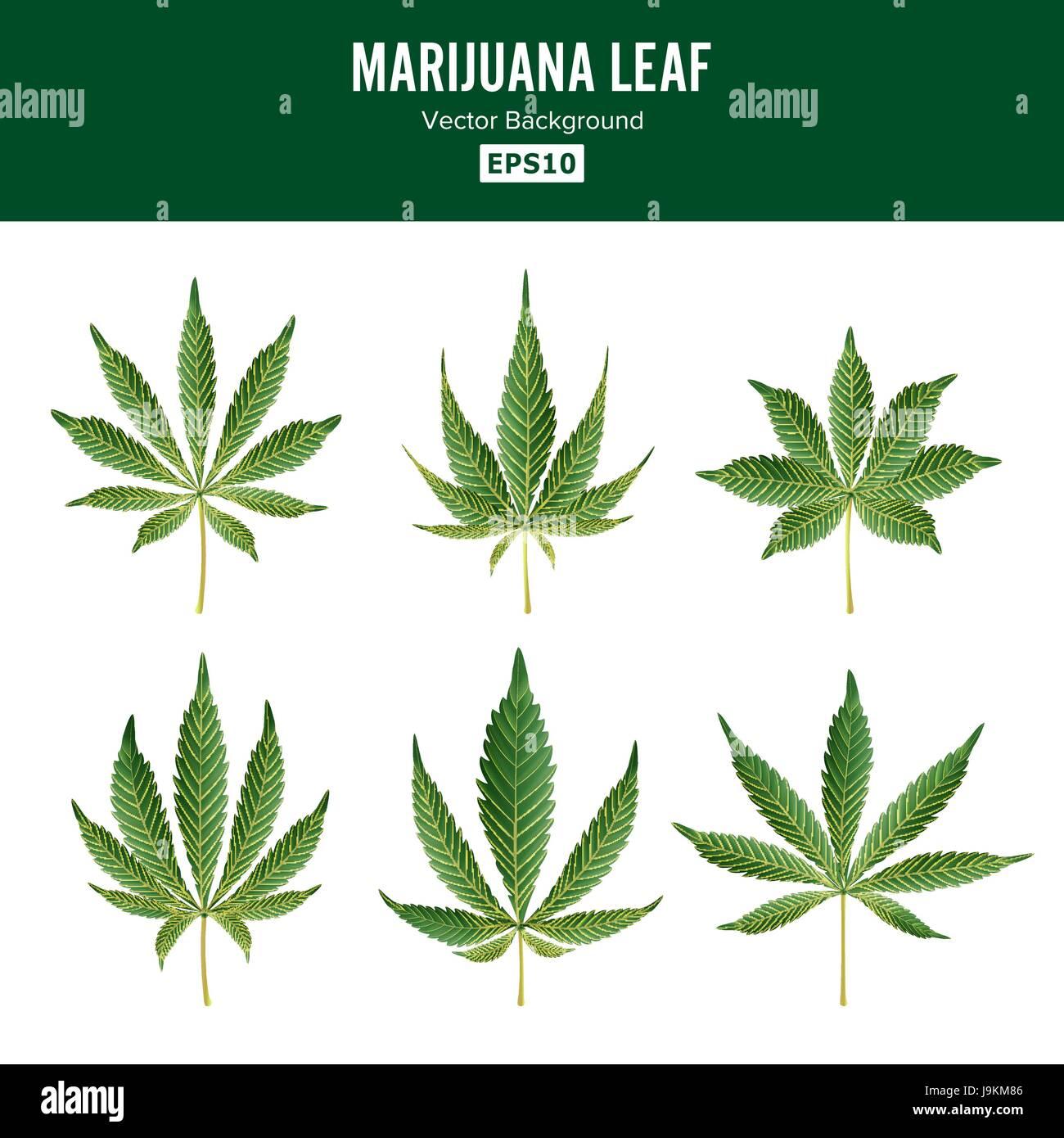 Vector de hojas verdes de marihuana. Colección de hierbas ...