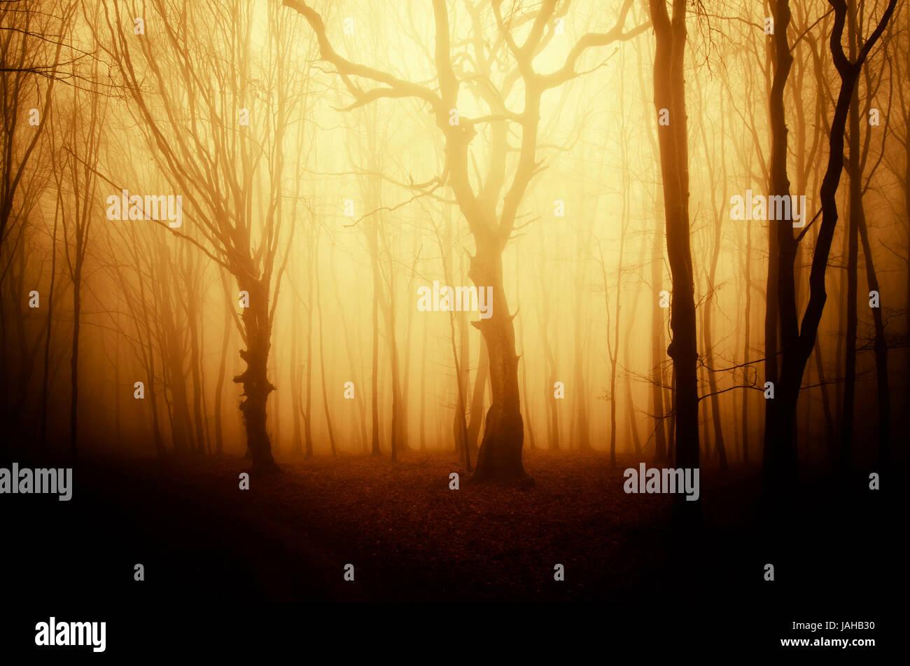 Luz del atardecer de otoño dorado en la fantasía de fondo forestal Imagen De Stock