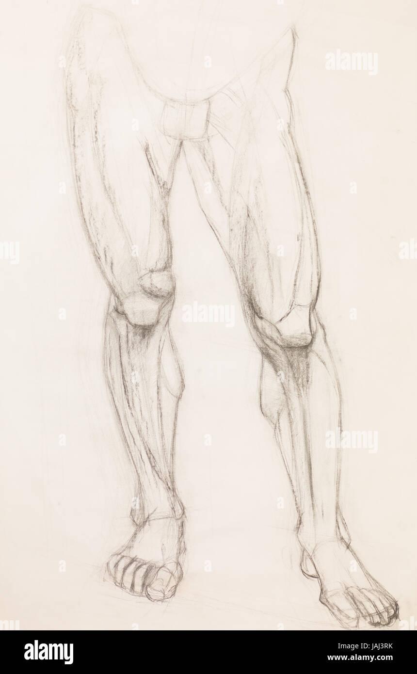 Ilustración lápiz dibujados a mano de las piernas de los seres ...