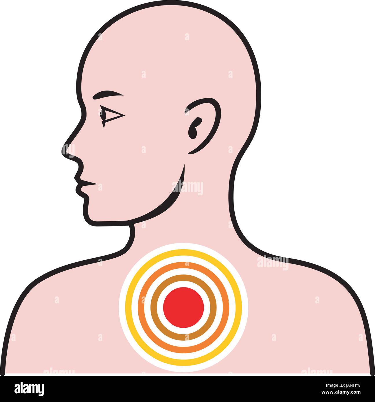 Ilustración de la anatomía humana mostrando un torso masculino ...