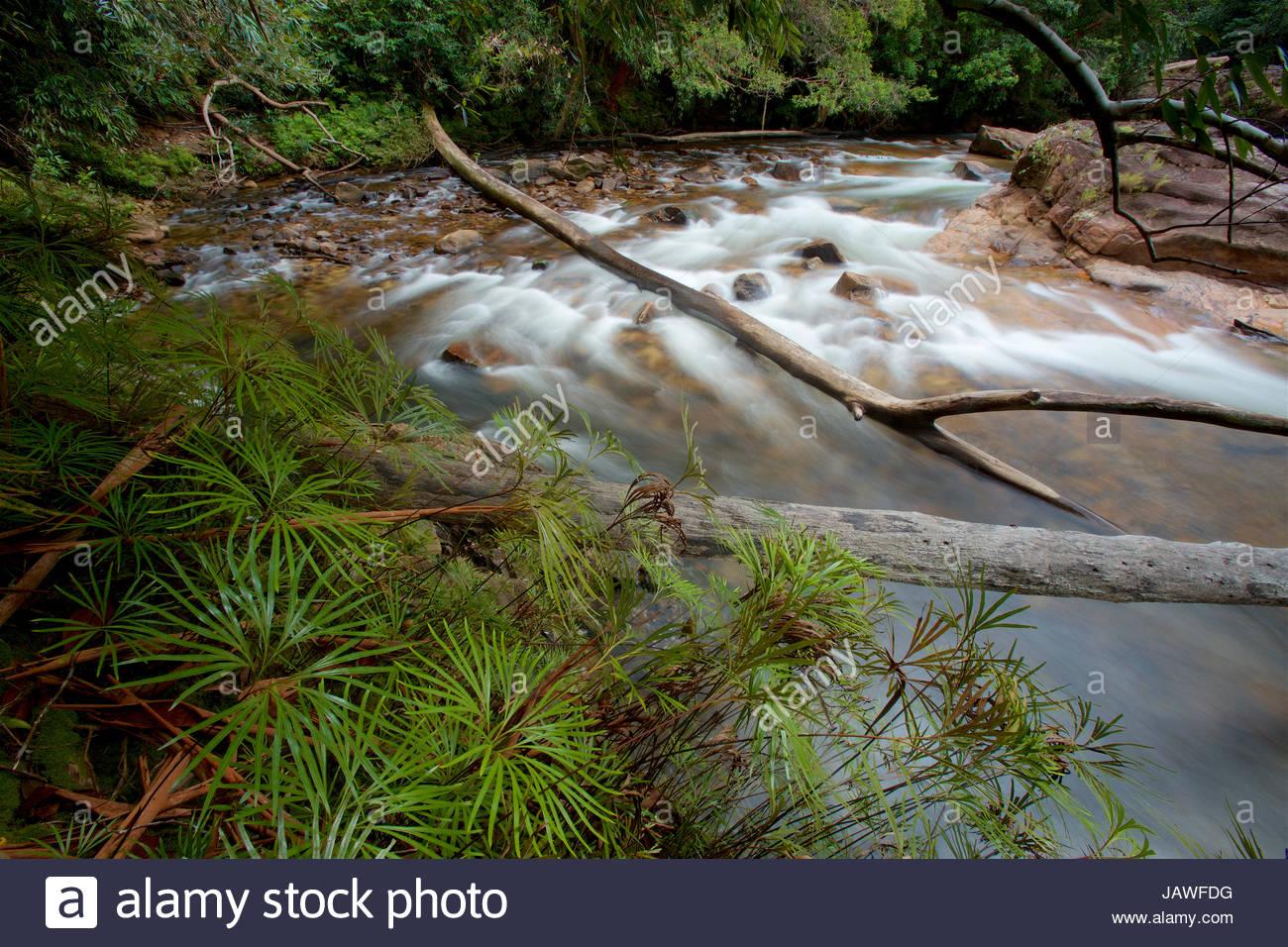 El Río Siduk, profundo en el Parque Nacional Gunung Palung, fluye a través del bosque tropical prístino. Foto de stock