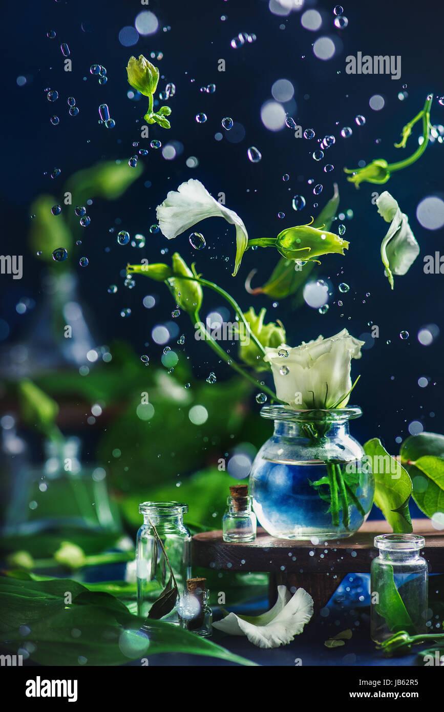 Eustoma Flotante Pétalos De Flores Yemas Y Gotas De Agua En
