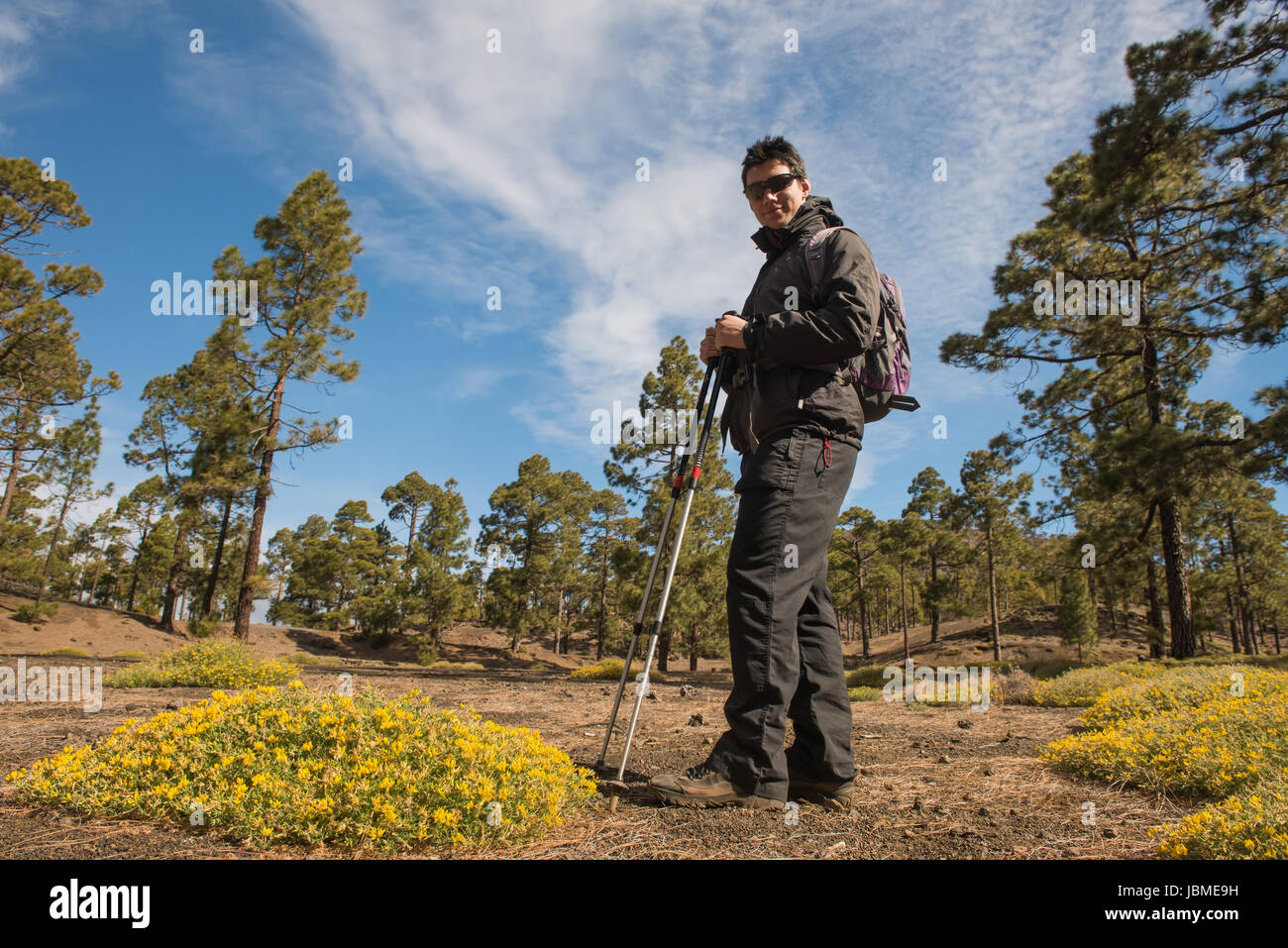 Caminante hombre senderismo en el bosque Tenefire, Canarias Imagen De Stock