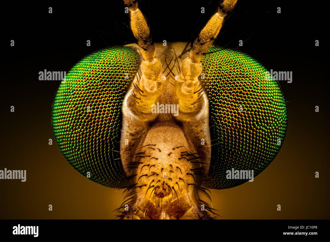 Macro extremo frontal completa - retrato de una grúa de ojos verdes volar, amplificado a través de un Imagen De Stock