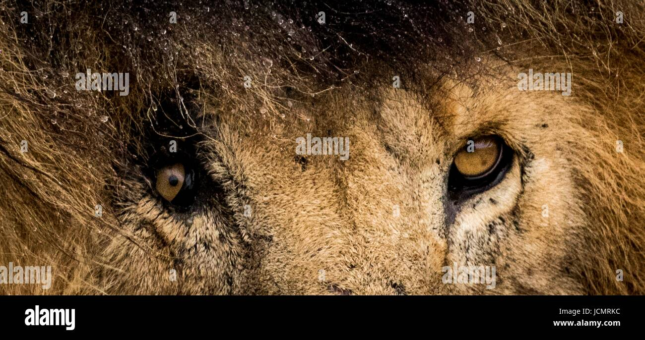 Hermosa fauna africana Foto de stock