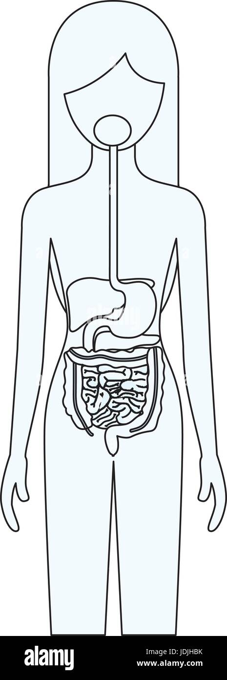 Dibujo Silueta De Persona Del Sexo Femenino Con El Sistema Digestivo