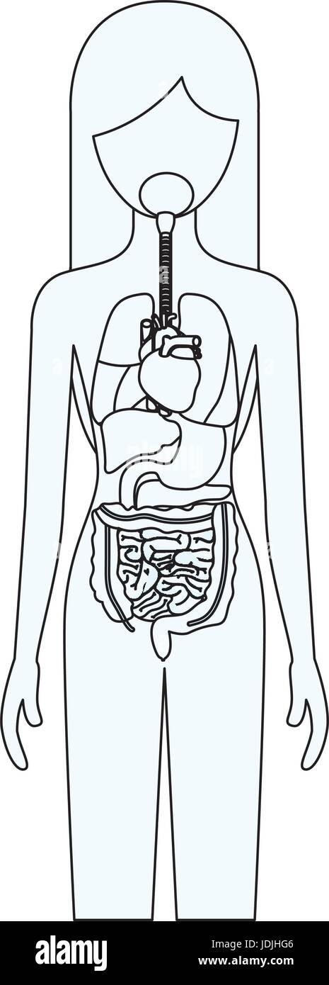 Human Organs Imágenes De Stock & Human Organs Fotos De Stock - Alamy