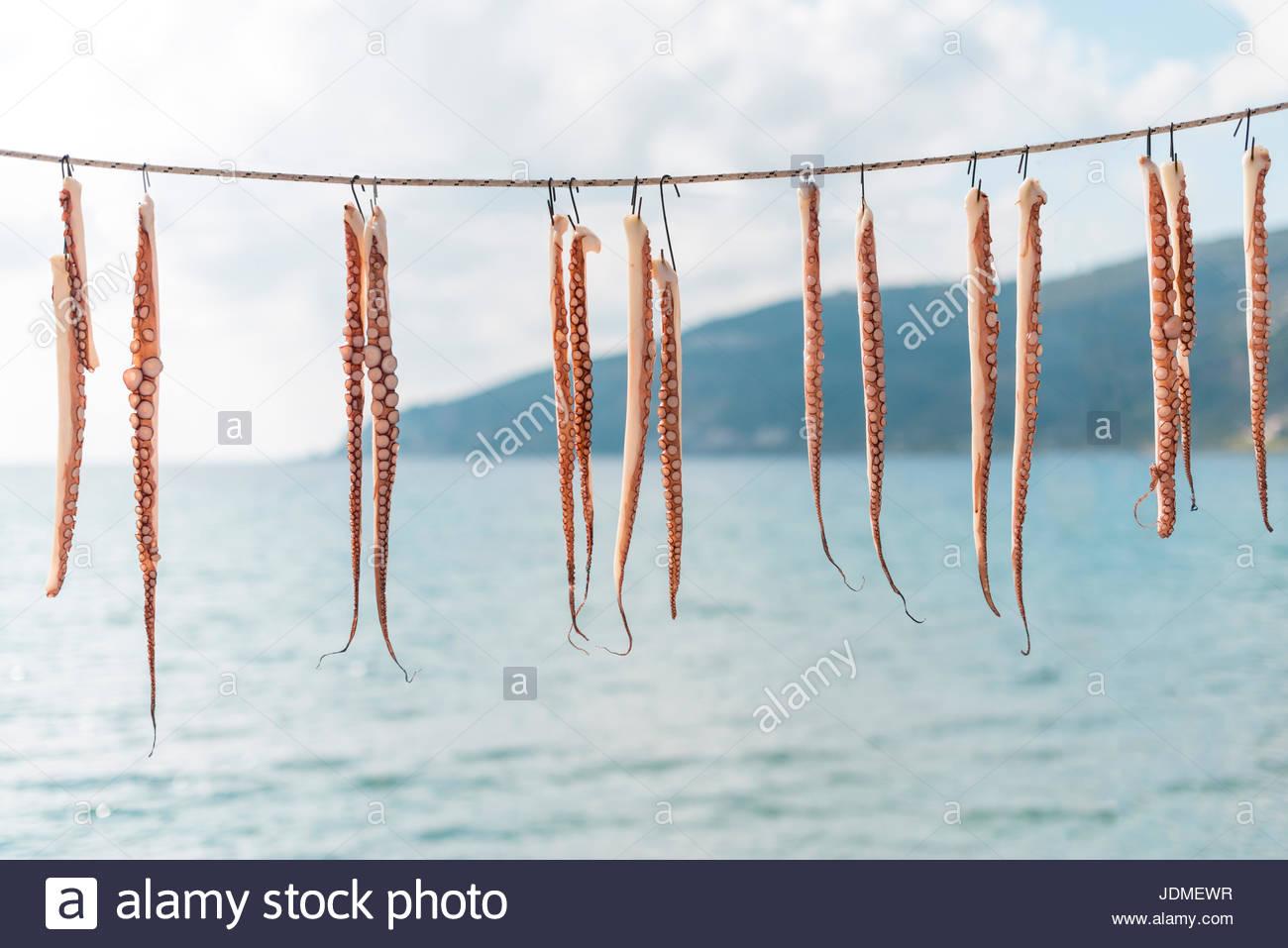 Pulpo tentáculos colgando para secar en la península de Mani en el Peloponeso, en Grecia. Imagen De Stock