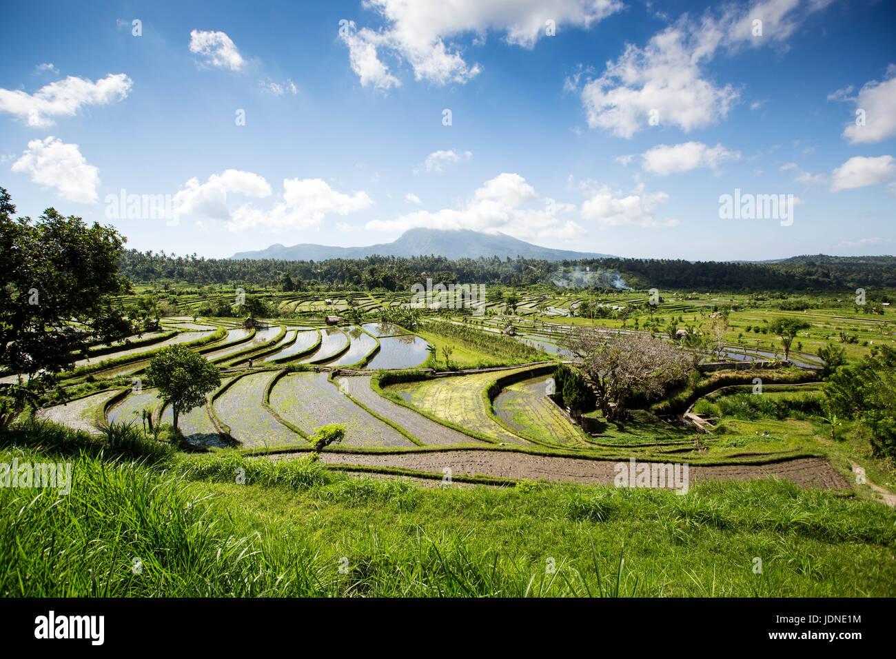 Terrazas de arroz en el norte de Bali, cerca de Ubud, con monte Agung en segundo plano. Foto de stock