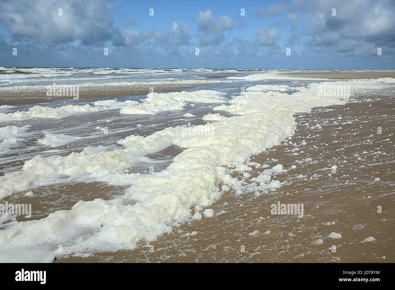 Lente, viento en vervuiling (?) zorgen voor het aanspoelen van afgestorven algen Imagen De Stock