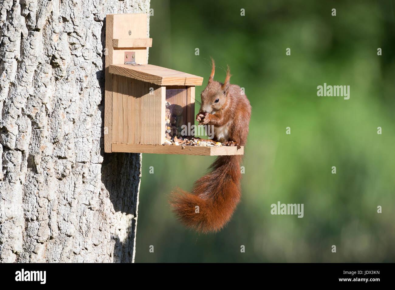 Futterstation Eichhörnchen Futterhaus Futterbox
