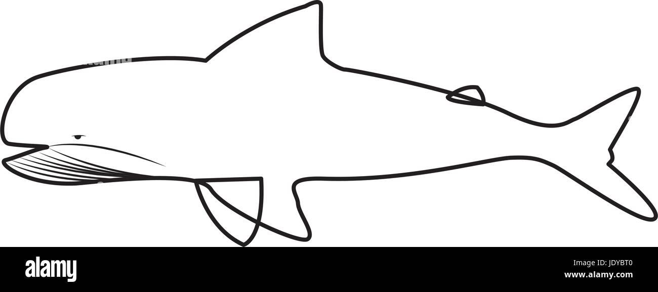 Fauna ballena agua silueta animal Ilustración del Vector