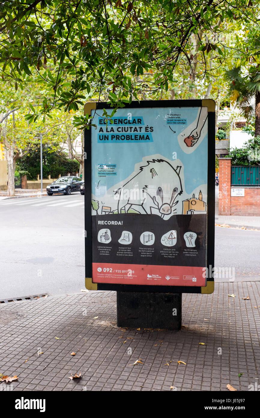Carteles de advertencia sobre jabalí en Sant Cugat del Vallés, Barcelona, Cataluña. Cartells d'advertència. Imagen De Stock