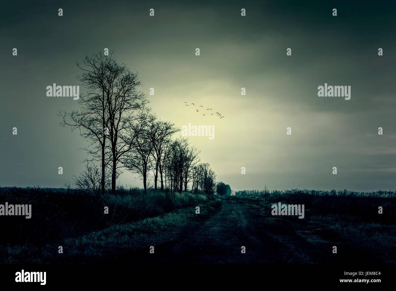 Foto atmosférica de árboles secos Imagen De Stock