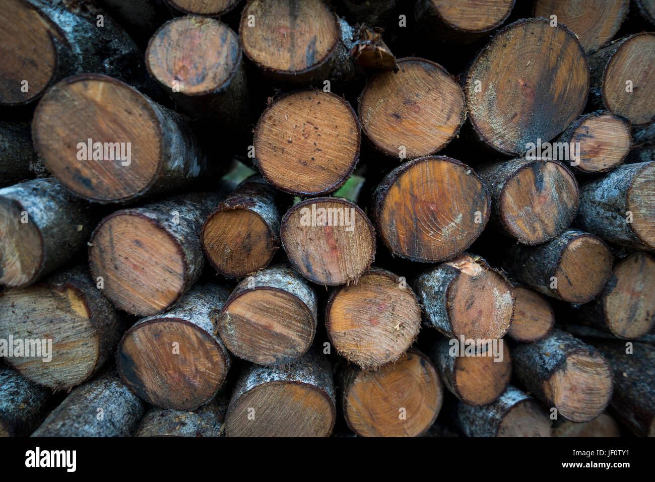 Leñadores del Sarao leñadores / Imagen De Stock