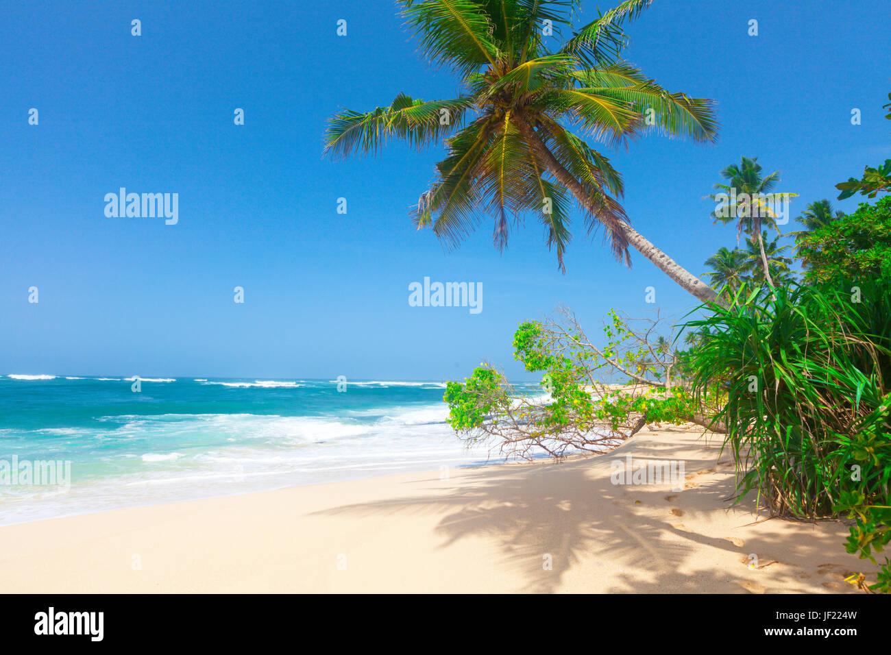 Playa tropical con palmeras de coco Imagen De Stock