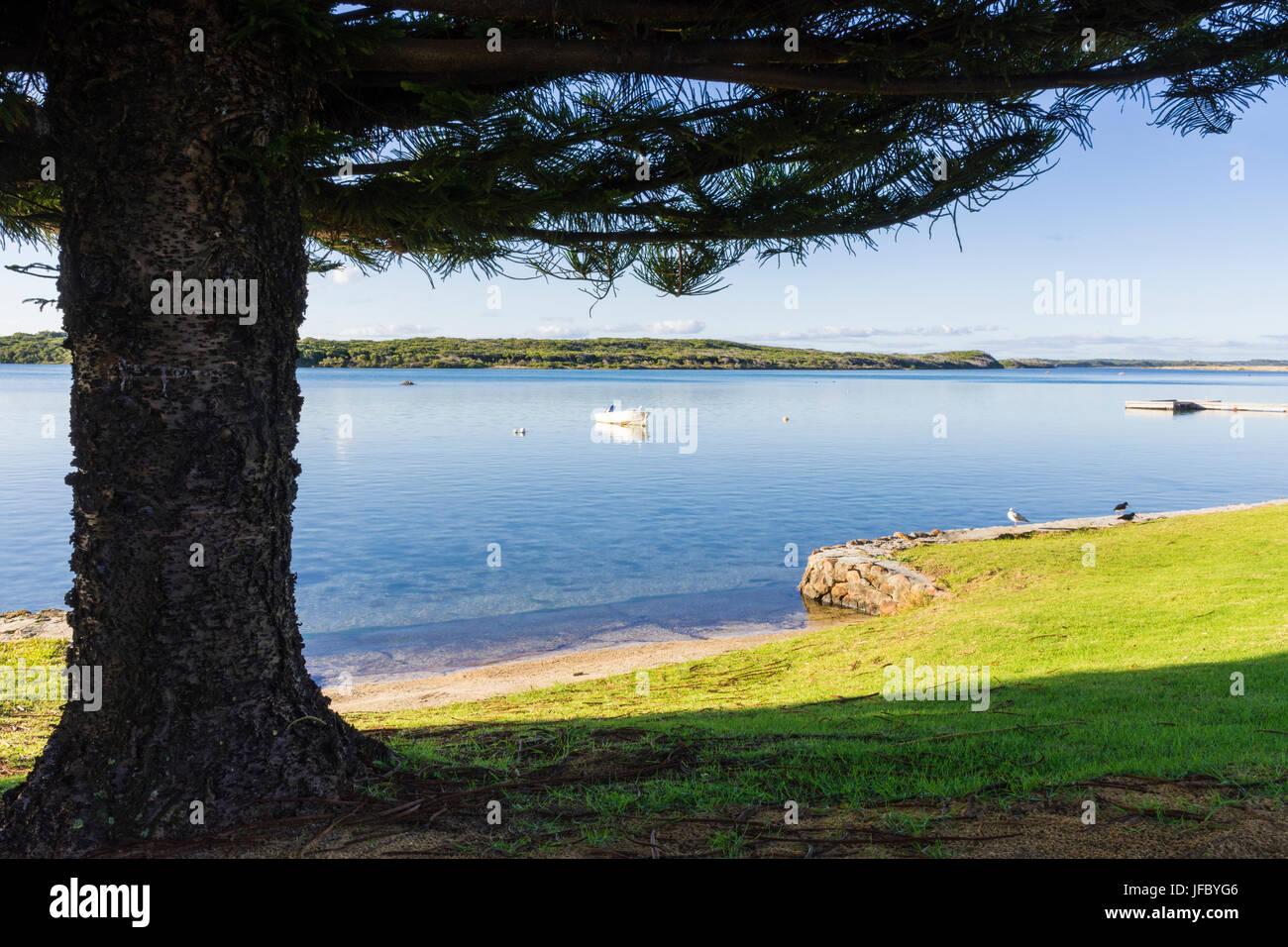 Árbol foreshore enmarcadas en la bahía del Sena Hardy entrada cerca ...