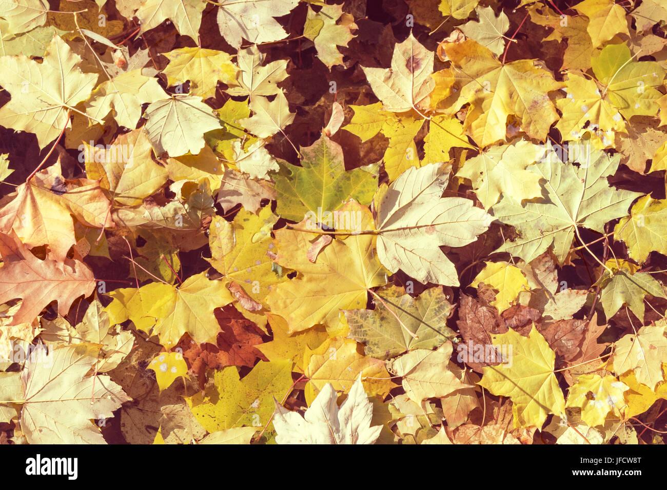 Amarillo otoño hojas de arce acostado sobre el agua Foto de stock