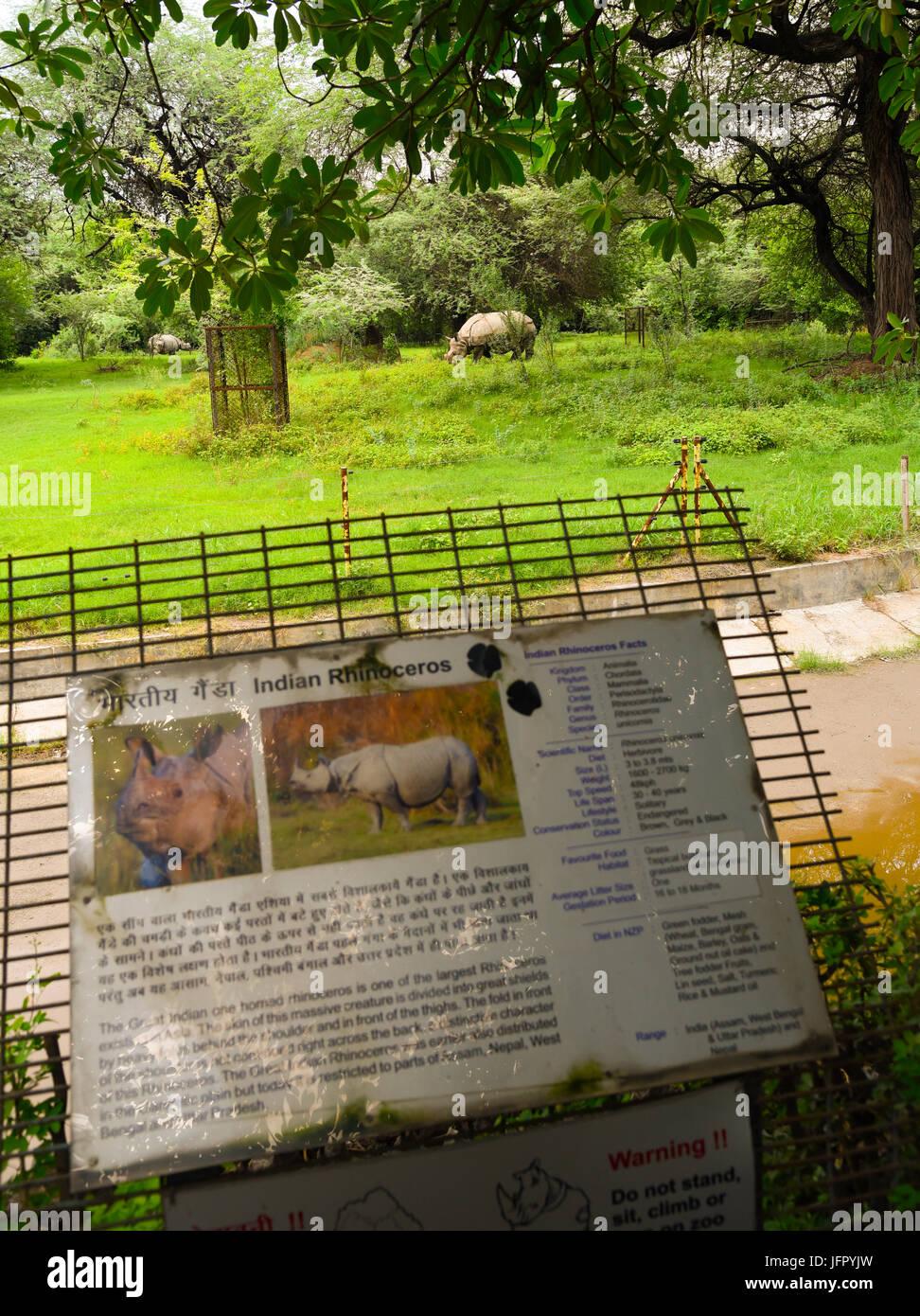 Paseos silvestres Rinocerontes indios en el verde de la naturaleza al aire libre, parque o bosque en el mes de junio de 2017 después de la lluvia con la última información de la imagen Foto de stock