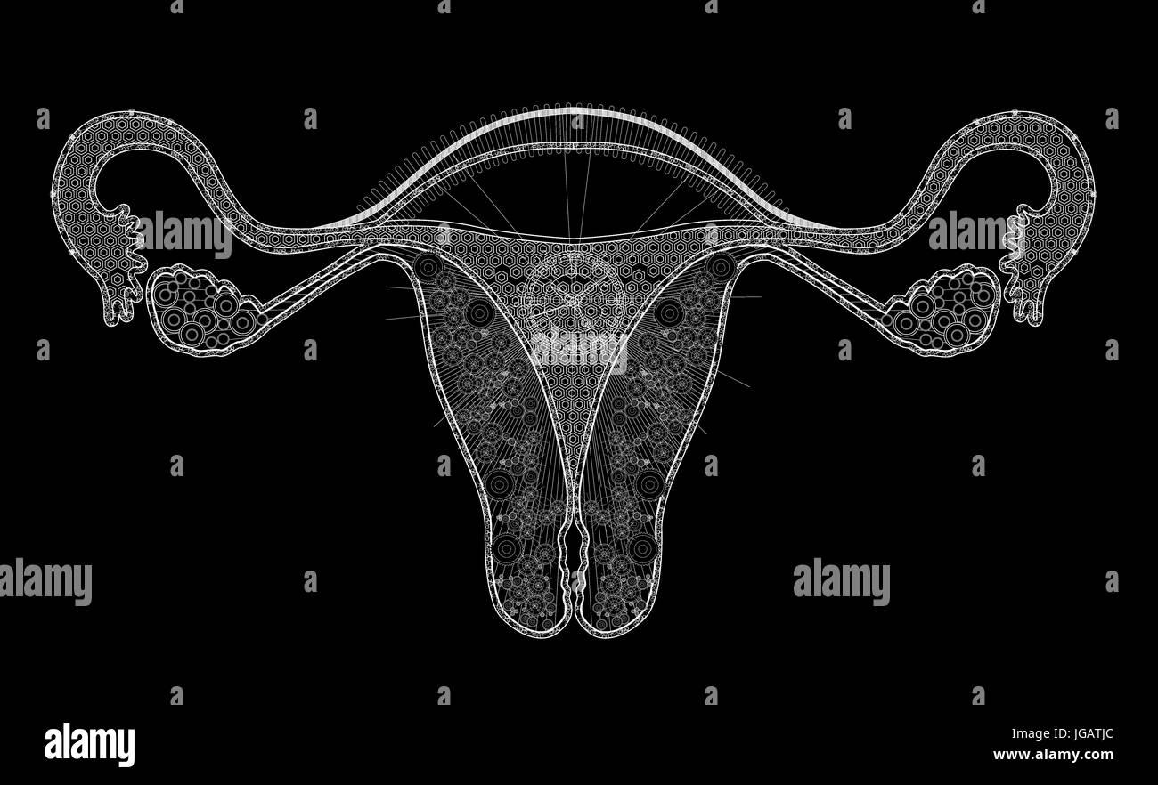 línea blanca ilustración del sistema reproductivo humano con fondo