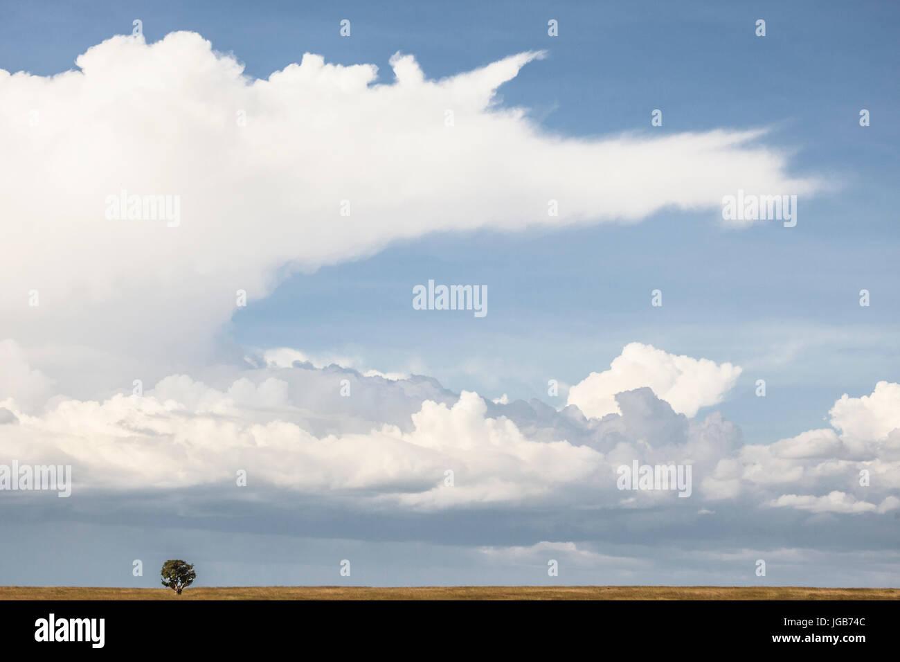 Horizonte de Masai Mara, Kenya. Foto de stock