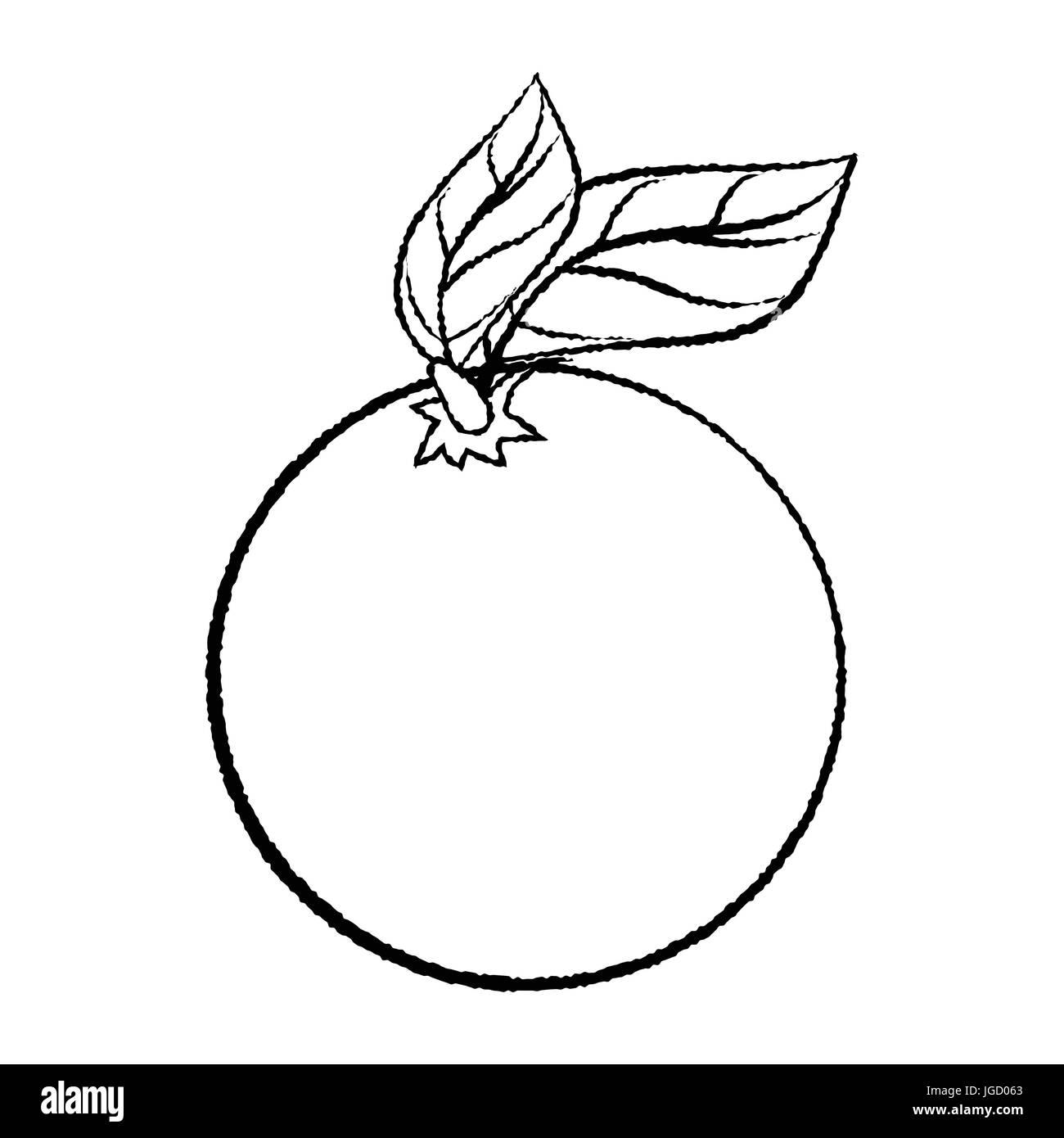 Croquis Dibujados A Mano De Naranja Y Hoja Aislados En Blanco Y