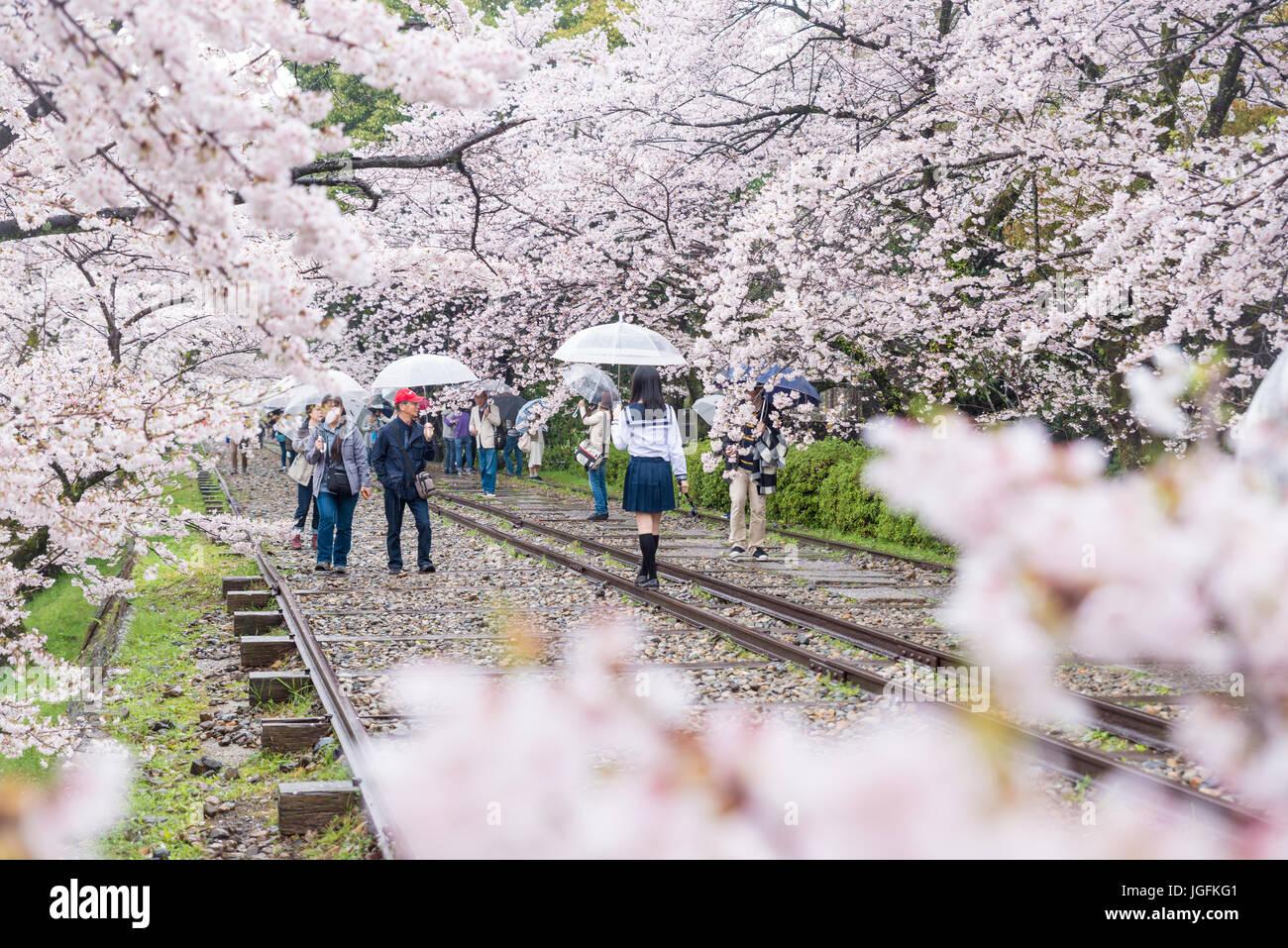 Kyoto, Japón - Abril 9, 2017: la gente disfruta el inicio de la temporada de primavera en Keage pendiente con sakura (cerezos en flor), el Protocolo de Kyoto. Foto de stock