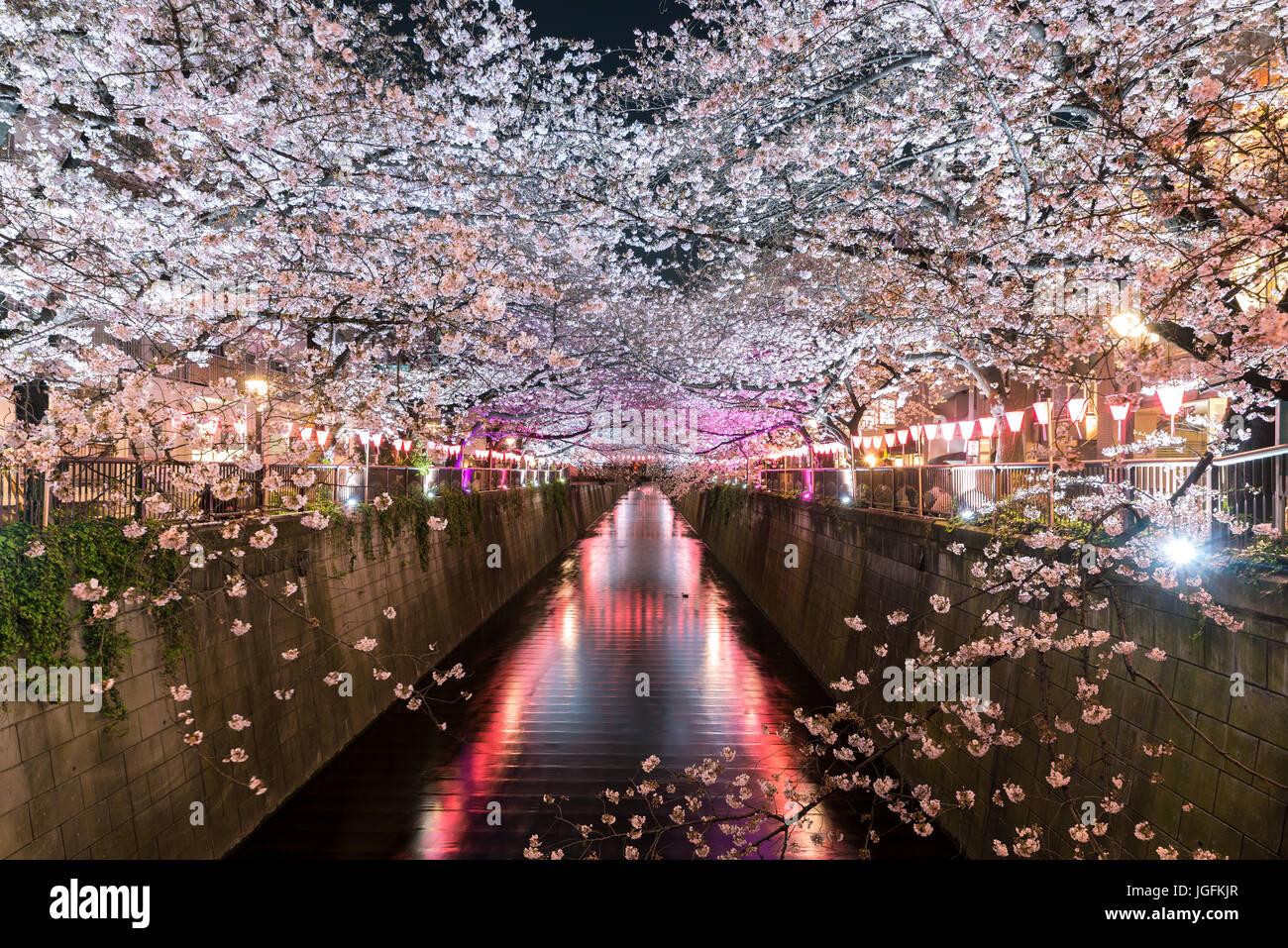 Flor de Cerezo forrada Meguro Canal por la noche en Tokio, Japón. Primavera en abril en Tokio, Japón. Imagen De Stock