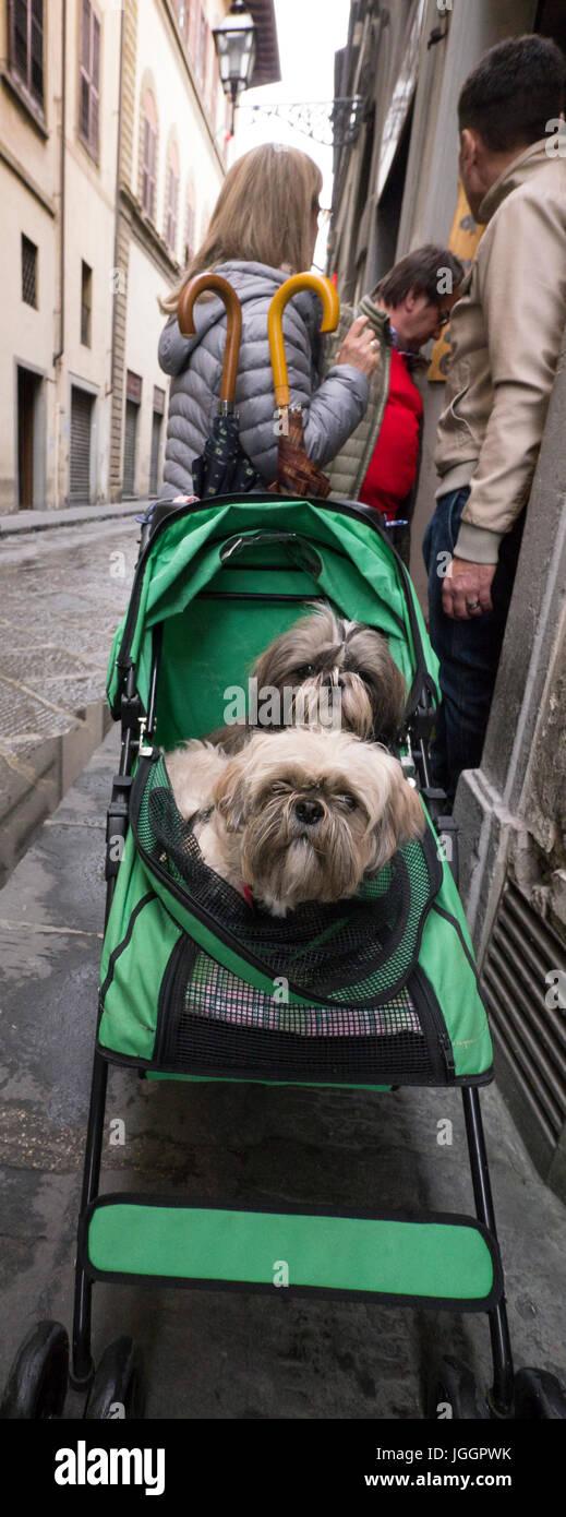 52b48a16f72d Dos perros en un carro del bebé en una calle de Florencia, Italia. Imagen
