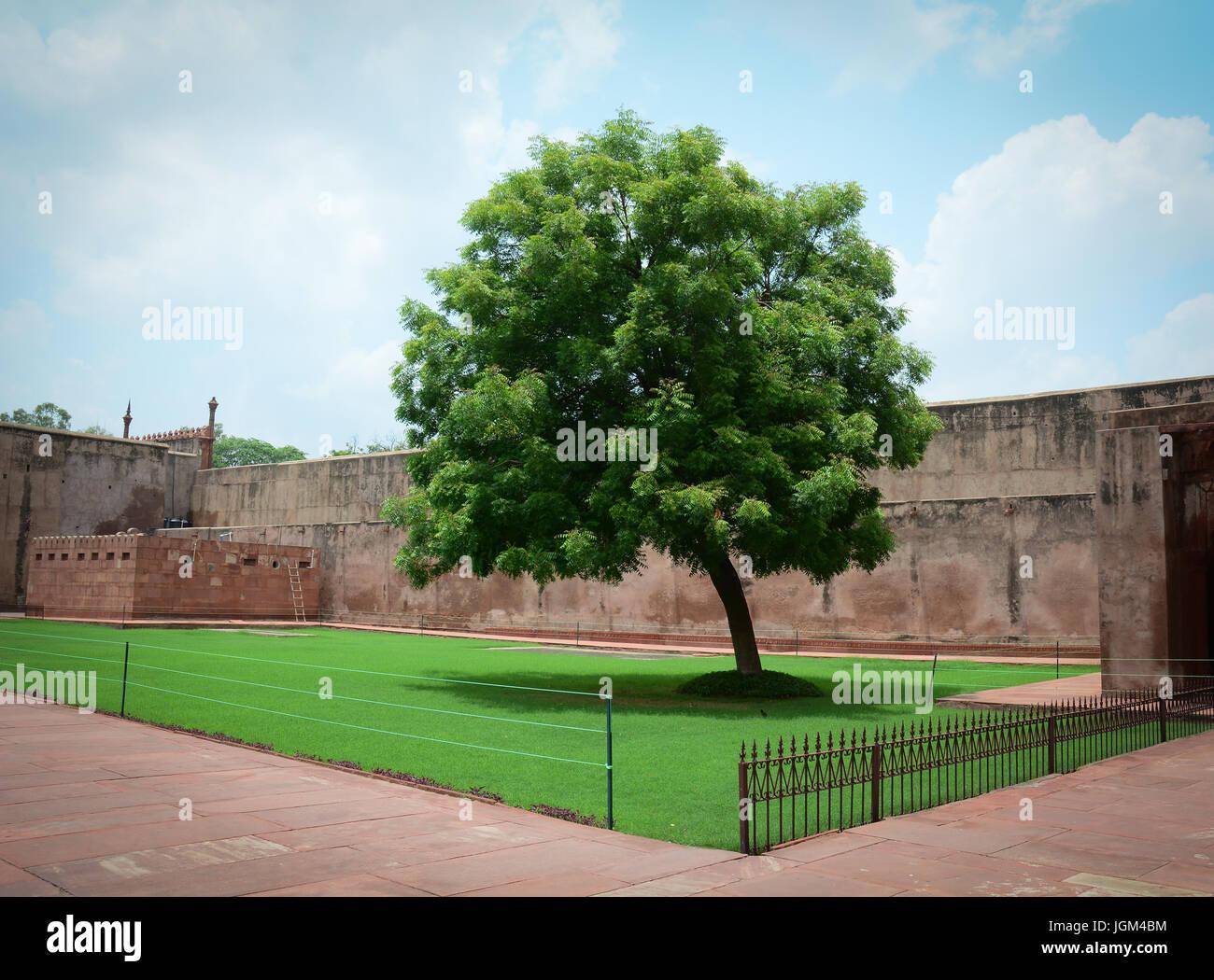 El Fuerte de Agra con el árbol. La fortaleza fue construida por los ...