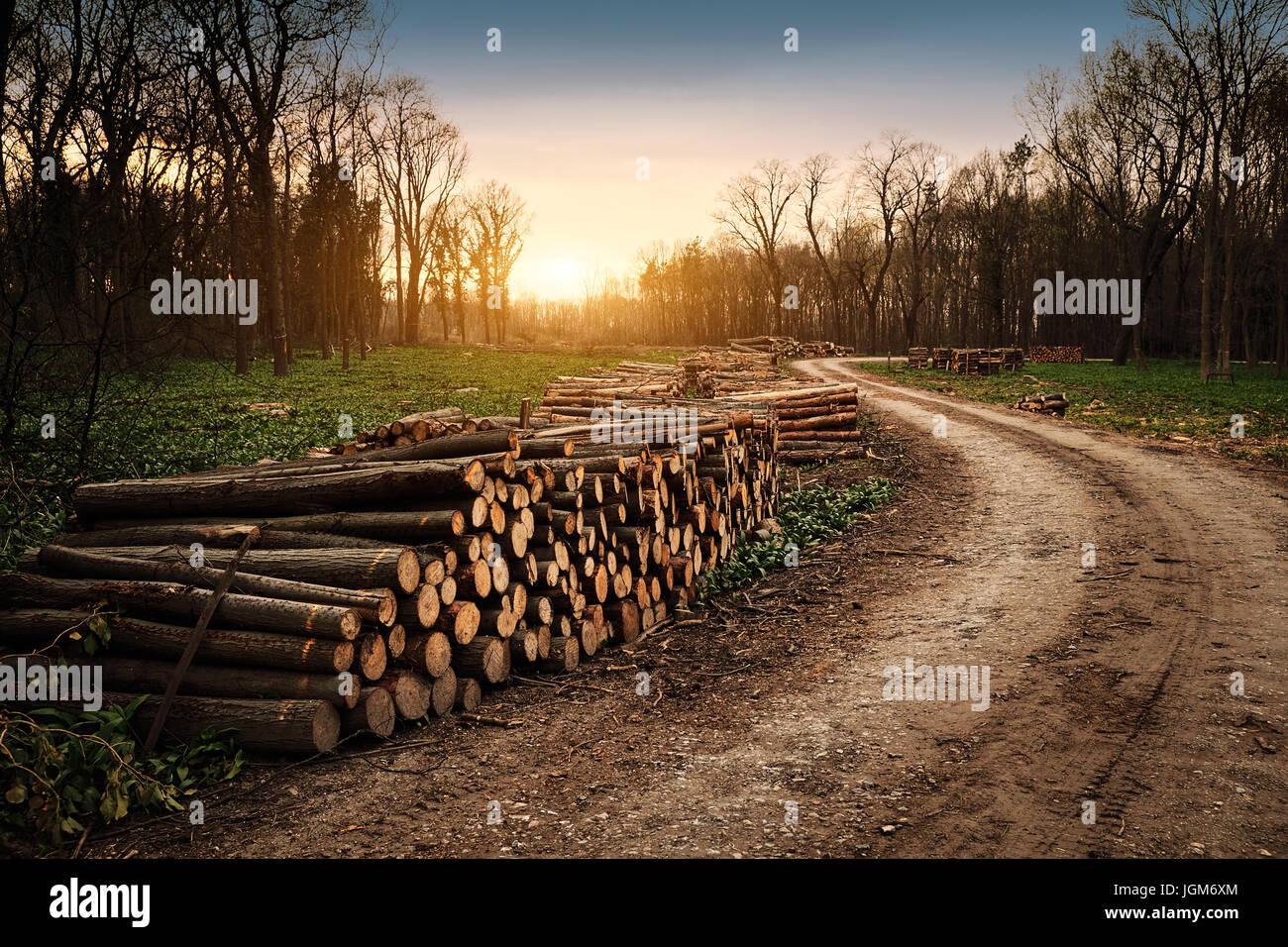 Industria de deforestación Imagen De Stock