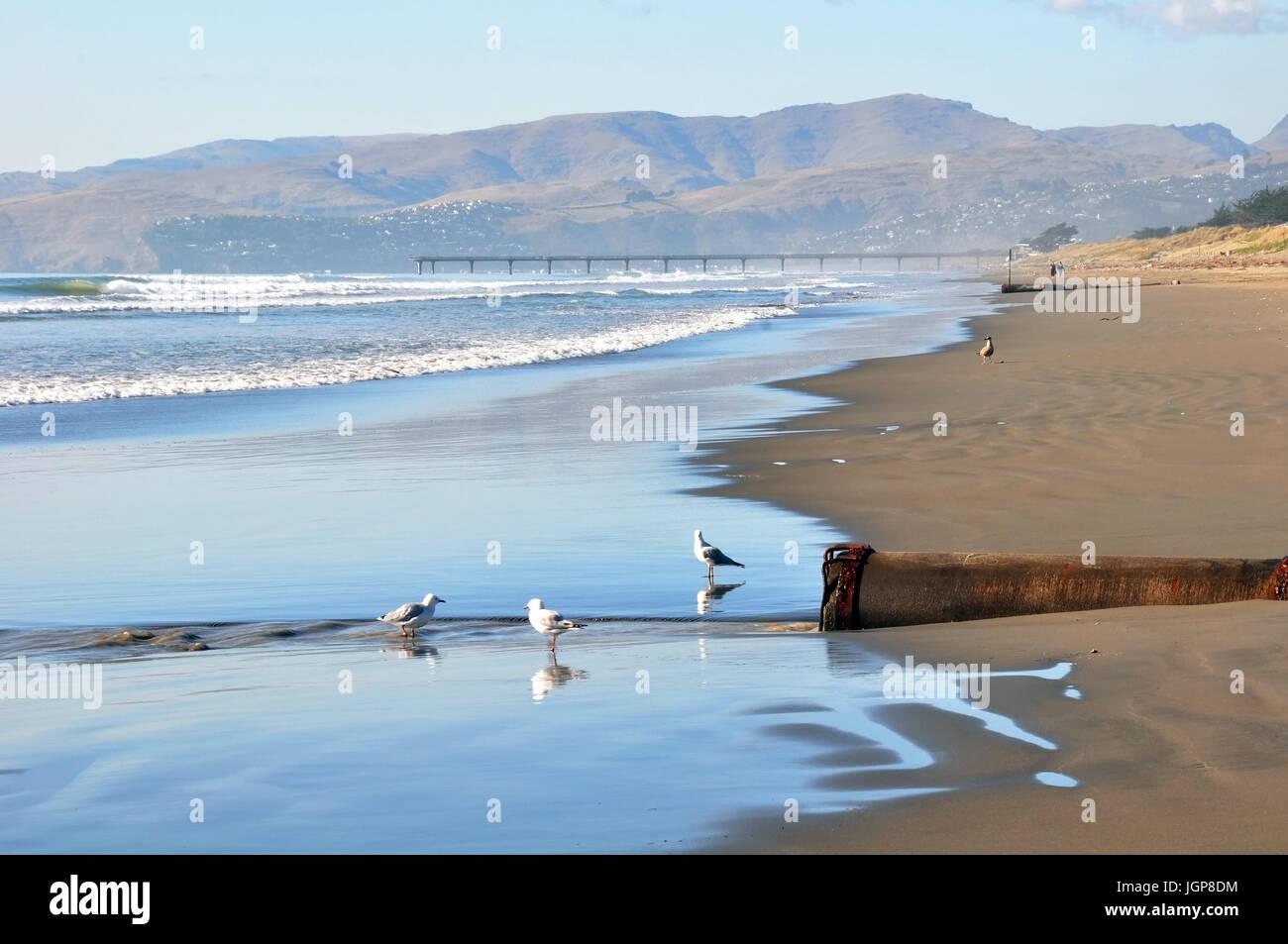 Prístina playa de Brighton en un perfecto día de verano es desierto salvo por gaviotas en primer plano. Christchurch, Foto de stock